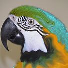 Well Painted Macaw? by WTBird