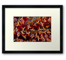 Animal flowers Framed Print
