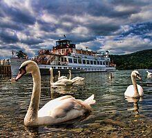 Swan Lake...... by Alex Hardie