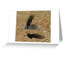 """Watch out I'm coming at ya"" Dark eyed Junco Greeting Card"