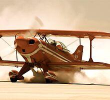 Desert flight by Stacie Forest