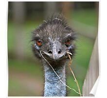 Do you emu? Poster