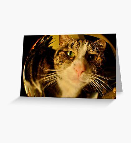 fisheye Zoe Greeting Card