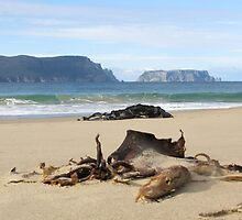 Tasman Island - From Crescent Beach, Tasman Peninsula by Jennifer Radcliffe