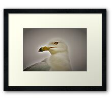 Seagull in Profile Framed Print