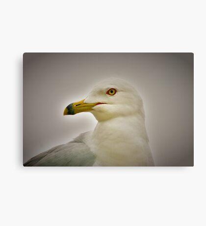 Seagull in Profile Canvas Print