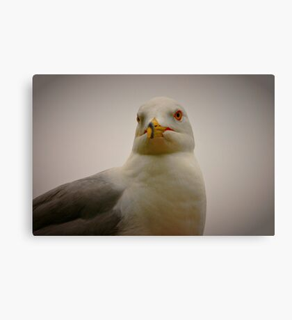 Seagull Stare Canvas Print