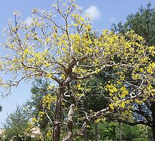 Lovely Yellow Flowered Tree by Nicole Flothe