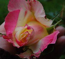 Beauty In Hand by Jonice