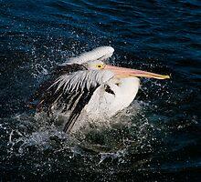 Splashing about by Jason Ruth
