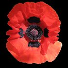 Poppy in Black by John Thurgood