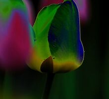 Pastel Tulips by KAVU