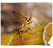Ichneumon Wasp Poster