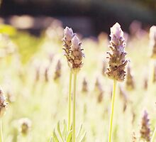 Lavender Garden by Melina Roberts