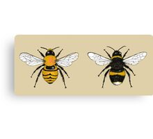 Bumblebee Illustrations Canvas Print