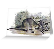 Western Brush wallaby Greeting Card