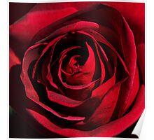 Rosa Rubra Poster