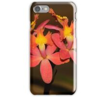 reed-stem Epidendrum Orchid iPhone Case/Skin