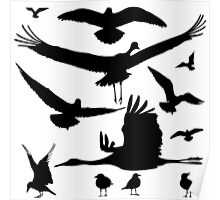 Birds silhouettes Poster