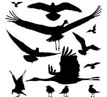 Birds silhouettes Photographic Print