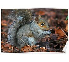 Time To Eat - Squirrel  Poster