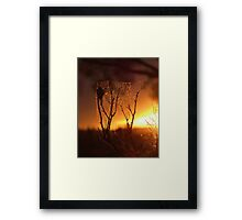 Saltbush Spiders... Framed Print
