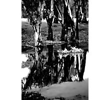 Reflections upon Trees Photographic Print