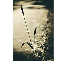strength Photographic Print