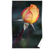 red and yellow bud Poster