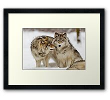 Love you sweetie... - Timber Wolves Framed Print