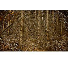 Trash, Mt Burr Forrest Photographic Print