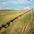 Barbed and rusting by Keiran Lusk