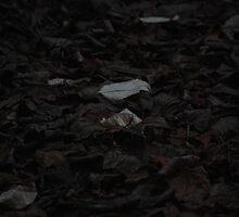 floor of fallen leaves by Deanne Dwight