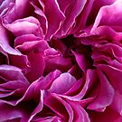 Rose petals by Avril Harris