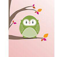 Sweet owl in a tree 3 Photographic Print