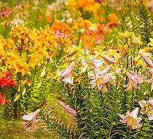 Lilycrest Gardens Bloom 2015 by Marilyn Cornwell