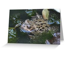 Backyard Habitat Greeting Card