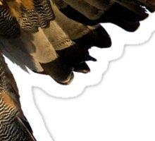 African Harrier Hawk Sticker