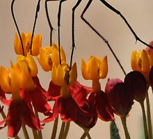 What is tip toeing through the Milkweed? (solved by misfits) by Marie Terry