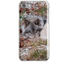 Timber Wolf iPhone Case/Skin