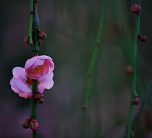 Petals Opening up   by Deanne Dwight