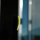 Dangling Caterpillar by peacegirl