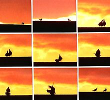 Dove Love Story by IngridSonja