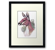 Red kangaroo portrait Framed Print