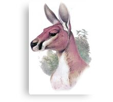 Red kangaroo portrait Metal Print