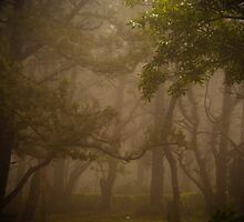 Spooky by Kamalpreet S. Sawhney