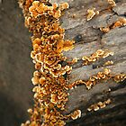 Frilly Fungi by Lisa G. Putman