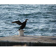 Alone cormorant at the coast. Photographic Print