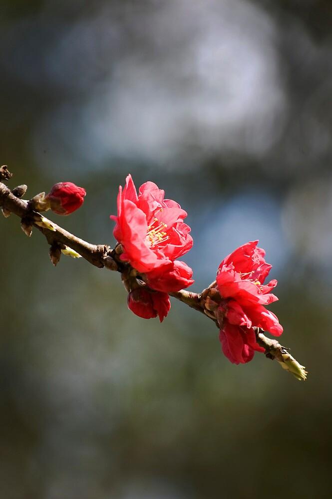 Downward Blossoms by Diana Mankowski