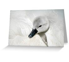 Young Cygnet Greeting Card